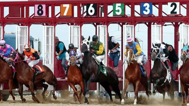 Grab knowledge on horse betting strategy